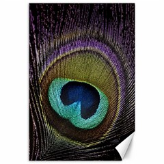Peacock Feather Canvas 24  X 36