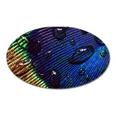 Peacock Feather Retina Mac Oval Magnet by BangZart