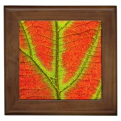 Nature Leaves Framed Tiles by BangZart