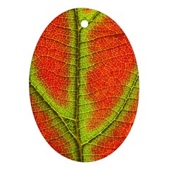 Nature Leaves Ornament (oval)