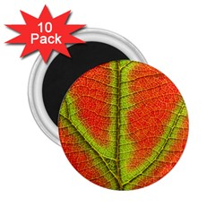 Nature Leaves 2 25  Magnets (10 Pack)