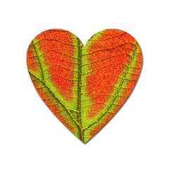Nature Leaves Heart Magnet by BangZart