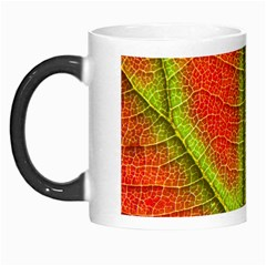 Nature Leaves Morph Mugs by BangZart