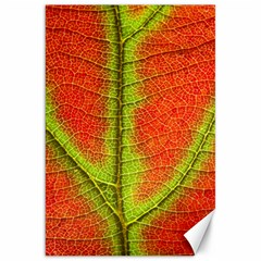 Nature Leaves Canvas 20  X 30