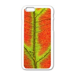 Nature Leaves Apple Iphone 6/6s White Enamel Case by BangZart