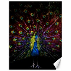 Beautiful Peacock Feather Canvas 12  X 16   by BangZart