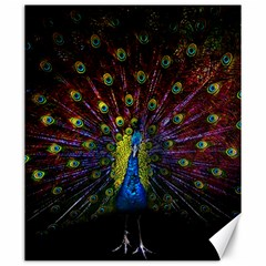 Beautiful Peacock Feather Canvas 20  X 24   by BangZart
