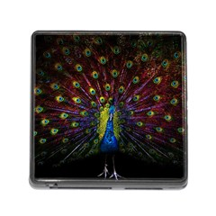 Beautiful Peacock Feather Memory Card Reader (square)