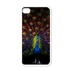 Beautiful Peacock Feather Apple Iphone 4 Case (white)