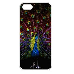 Beautiful Peacock Feather Apple Iphone 5 Seamless Case (white)