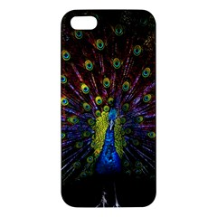 Beautiful Peacock Feather Iphone 5s/ Se Premium Hardshell Case by BangZart