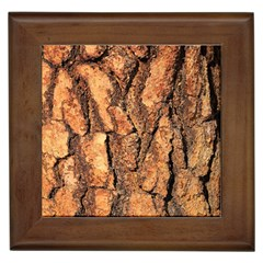 Bark Texture Wood Large Rough Red Wood Outside California Framed Tiles