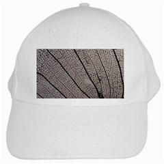 Sea Fan Coral Intricate Patterns White Cap