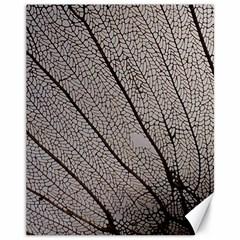 Sea Fan Coral Intricate Patterns Canvas 11  X 14