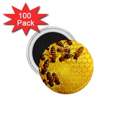 Honey Honeycomb 1 75  Magnets (100 Pack)