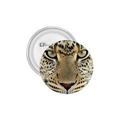 Leopard Face 1 75  Buttons