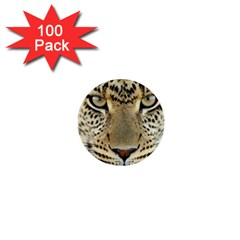 Leopard Face 1  Mini Buttons (100 Pack)
