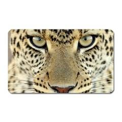 Leopard Face Magnet (rectangular)