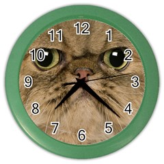 Cute Persian Catface In Closeup Color Wall Clocks