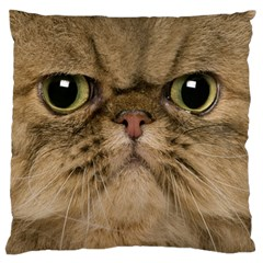 Cute Persian Catface In Closeup Large Flano Cushion Case (one Side) by BangZart
