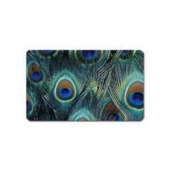 Feathers Art Peacock Sheets Patterns Magnet (name Card)