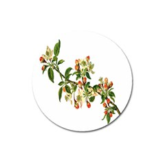 Apple Branch Deciduous Fruit Magnet 3  (round)