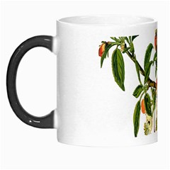 Apple Branch Deciduous Fruit Morph Mugs