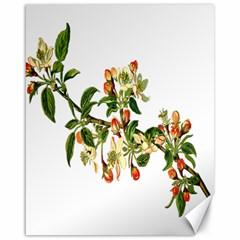 Apple Branch Deciduous Fruit Canvas 16  X 20
