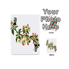 Apple Branch Deciduous Fruit Playing Cards 54 (mini)