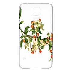 Apple Branch Deciduous Fruit Samsung Galaxy S5 Back Case (white)