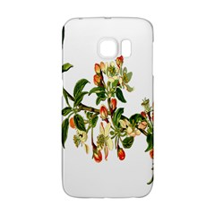 Apple Branch Deciduous Fruit Galaxy S6 Edge by Nexatart