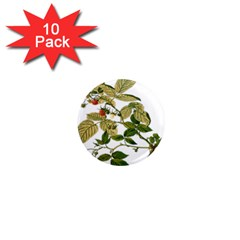 Berries Berry Food Fruit Herbal 1  Mini Magnet (10 Pack)