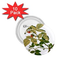 Berries Berry Food Fruit Herbal 1 75  Buttons (10 Pack) by Nexatart