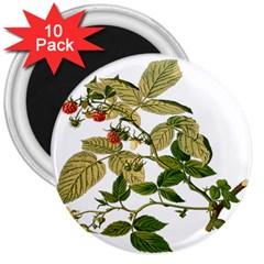 Berries Berry Food Fruit Herbal 3  Magnets (10 Pack)