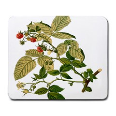 Berries Berry Food Fruit Herbal Large Mousepads by Nexatart