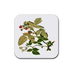 Berries Berry Food Fruit Herbal Rubber Coaster (square)