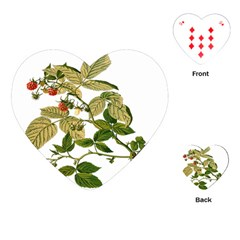 Berries Berry Food Fruit Herbal Playing Cards (heart)  by Nexatart