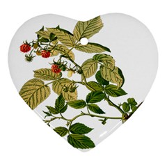 Berries Berry Food Fruit Herbal Heart Ornament (two Sides)