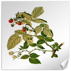 Berries Berry Food Fruit Herbal Canvas 16  X 16   by Nexatart