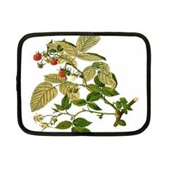 Berries Berry Food Fruit Herbal Netbook Case (small)  by Nexatart