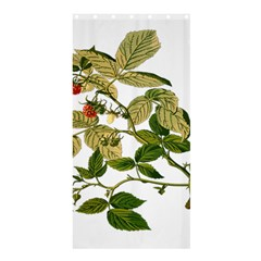 Berries Berry Food Fruit Herbal Shower Curtain 36  X 72  (stall)  by Nexatart