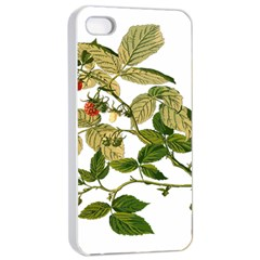 Berries Berry Food Fruit Herbal Apple Iphone 4/4s Seamless Case (white) by Nexatart