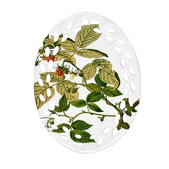 Berries Berry Food Fruit Herbal Oval Filigree Ornament (two Sides) by Nexatart