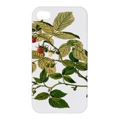 Berries Berry Food Fruit Herbal Apple Iphone 4/4s Premium Hardshell Case