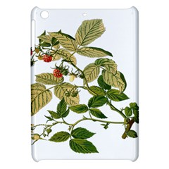 Berries Berry Food Fruit Herbal Apple Ipad Mini Hardshell Case by Nexatart