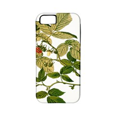 Berries Berry Food Fruit Herbal Apple Iphone 5 Classic Hardshell Case (pc+silicone) by Nexatart