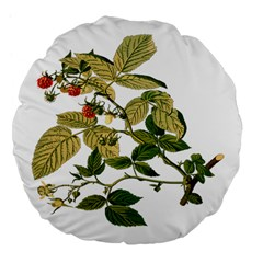 Berries Berry Food Fruit Herbal Large 18  Premium Flano Round Cushions by Nexatart