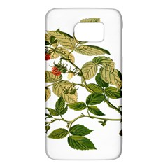 Berries Berry Food Fruit Herbal Galaxy S6 by Nexatart