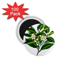 Bitter Branch Citrus Edible Floral 1 75  Magnets (100 Pack)  by Nexatart