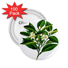 Bitter Branch Citrus Edible Floral 2 25  Buttons (100 Pack)